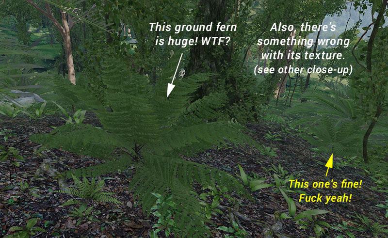 ground_fern_size_problem.jpg